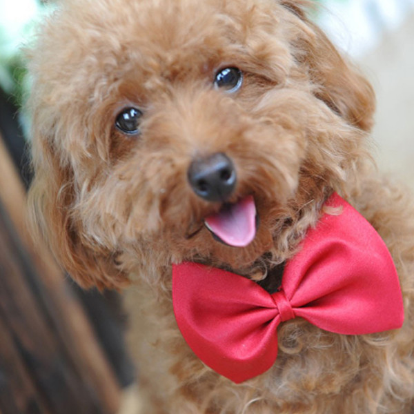 Dog Bow Ties 1
