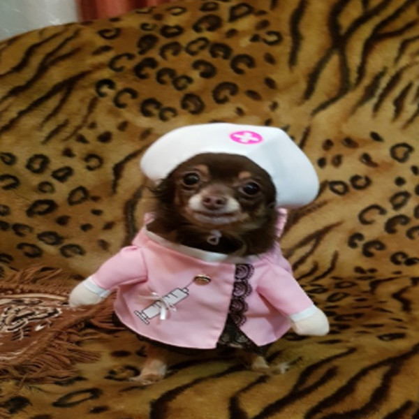 Pet Nurse Costume 1
