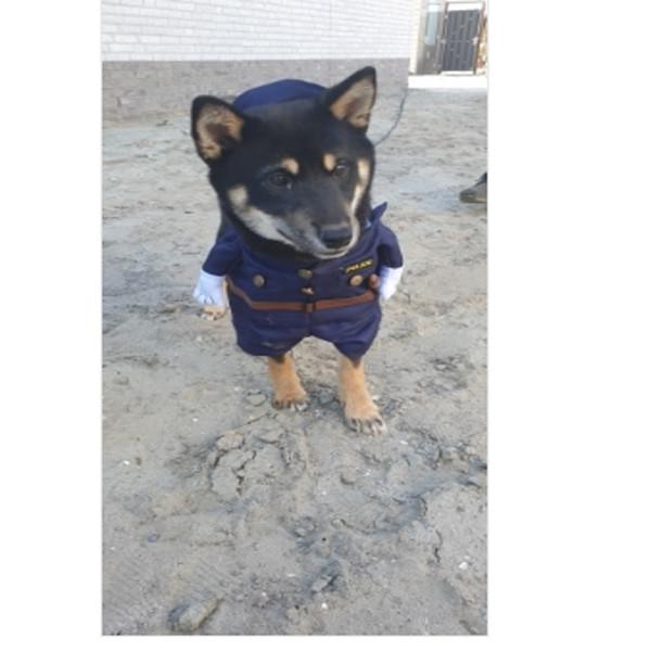 Pet Police Costume 3